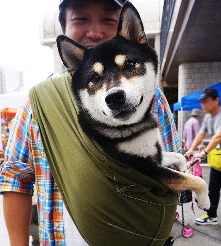 10kgのしば犬にドッグスリングをお使い頂いています
