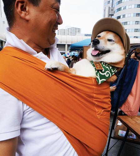 12kgのしば犬にドッグスリングをお使い頂いています