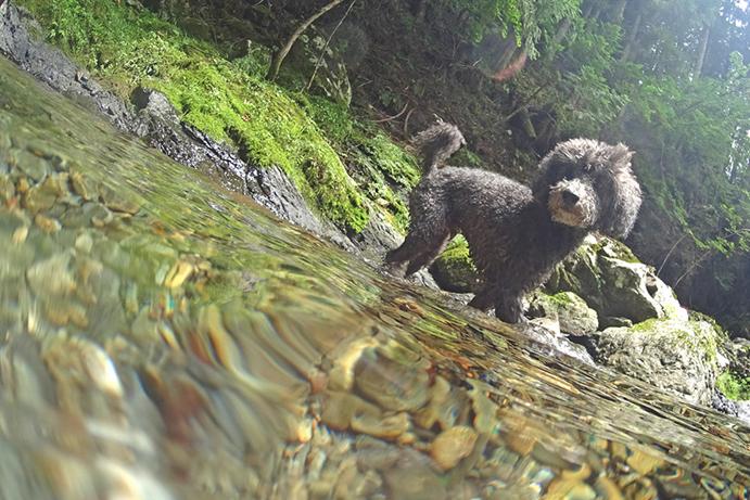 ノンムーと川遊び