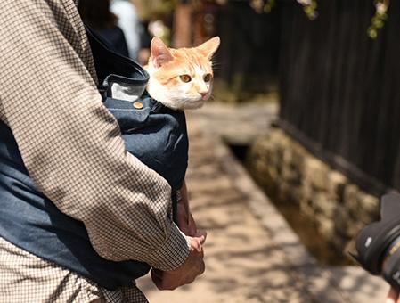 猫にもドッグスリングをお使い頂いています