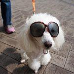 犬の遺伝病についてアレコレ調べてみた!1匹でも多くの犬が先天性疾患を持たずに生まれるために