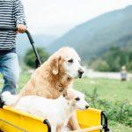 老犬を何とかお散歩に連れ出したい!愛犬を運ぶための介護用品を調べてみました。