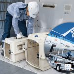 犬と飛行機(国内線)で移動する!航空会社別ルールのまとめ