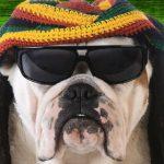 癒されるワン…。犬がリラックスする音楽はレゲエとソフトロックだった!