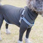 防寒対策だけじゃない!シュールな犬用全身タイツが便利すぎた-シェッドディフェンダー-
