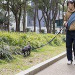 ツツ日記vol.3 | お散歩るんるん♪でもはじめての場所は緊張しちゃう-犬里親 大阪-