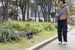 保護犬ツツさんは散歩が好き