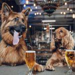 犬と暮らすならこんな会社で働きたい!育犬休暇、忌引き、扶養手当がもらえるって!