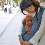 犬用抱っこ紐の選び方完全マニュアル~種類や選び方など解説。はじめて使う方必見