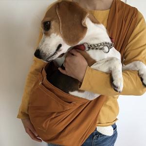 ビーグルに犬用スリングをお使いいただいています