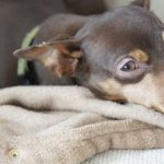 はじめて犬を迎える人に、保護犬をおすすめする5つの理由