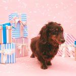 全力支援!!! 年始に画像&年賀状シェアで保護犬に家族が見つかるかもしれない。