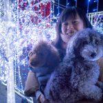 わんこ連れvol.10 キラキラ輝くイルミネーション!! 愛犬と光の迷路でパシャパシャ記念撮影がうれしすぎた 〜神戸イルミナージュ編〜