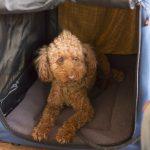 犬用キャリーバッグの選び方完全マニュアル~種類や選び方など解説。種類が多すぎて迷っている人必見!