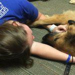 犬と暮らすことは本当に健康なのか?興味深い5の調査結果