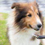 7/15(土)大阪吹田市にて保護犬譲渡会に出店!今回はアウトレット品のみの販売となります