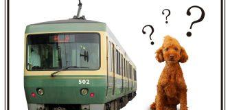 愛犬と電車に乗ってみた!注意点とルール&マナーまとめ【保存版】